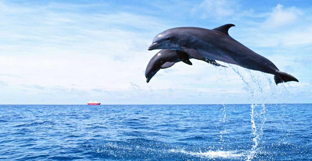 Observation-des-dauphins-00