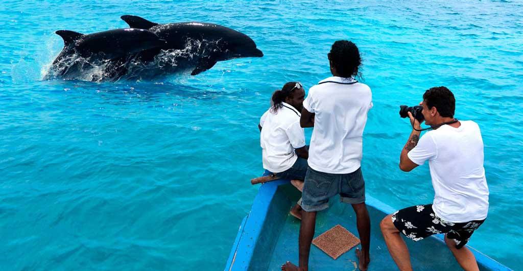 Observation-des-dauphins-01