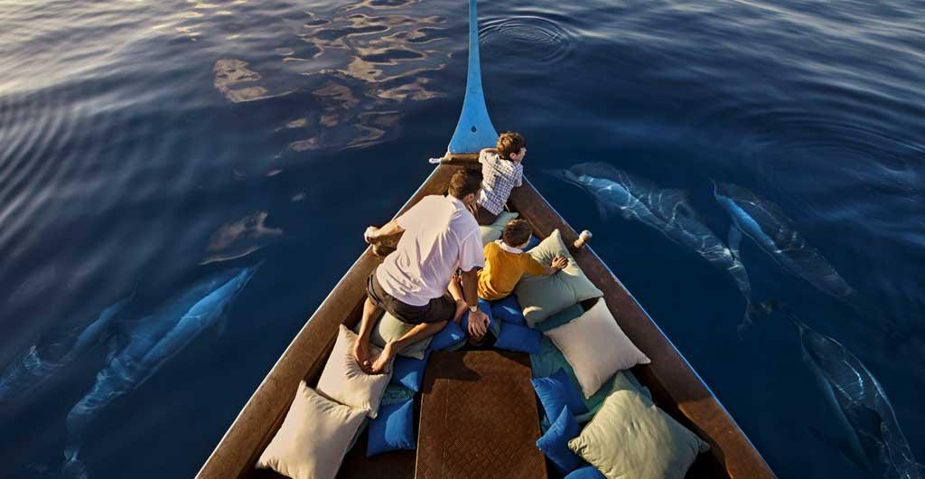 Observation-des-dauphins-02