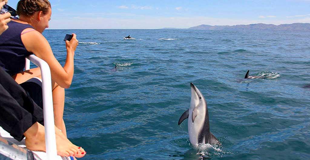 Observation-des-dauphins-03
